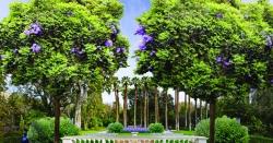 """ایتھنز کے سینٹر میں """"شاہی باغ""""تصاویر"""
