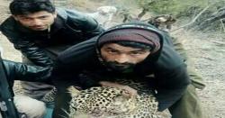کڑہ کے گاوں کایڑہ پنیالی میں لوگوں نے چیتے کو ھلاک کر دیا