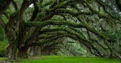 درخت لگانا سنت ہے اور آکسیجن حاصل کرنے کا بہترین ذریعہ بھی ہے، چوہدری بابر شہزاد