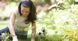 موسم گرما کی باغبانی