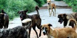 آوارہ کتوں سے تنگ علاقہ مکینوں کاانوکھا احتجاج آوارہ کتے بوری میں بند کر کے بلدیہ آفس میں پھینک دئیے