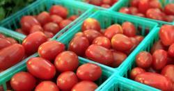 ٹماٹر کی قیمت میں حیرت انگیز کمی واقع ہو گئی