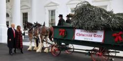دنیا بھر میں کرسمس کی تیاریاں جاری، وائٹ ہاؤس میں کرسمس ٹری پہنچا دیا گیا