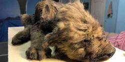 18 ہزار سال پہلے مرنے والا جانور اصل حالت میں برآمد