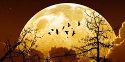 ''چاند روٹھ کر غائب ہونے والا ہے، تباہی مقدر بن گئی'' ،سائنسدانوں نے تہلکہ خیز انکشاف کر دیا