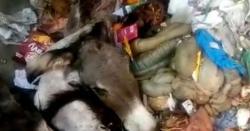 کراچی میں گدھوں کے سر اور باقیات پھینکنے کی سی سی ٹی وی ویڈیو موصو ل