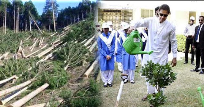 وزیراعظم کی میاںوالی آمد پر ہیلی پیڈ بنانے کے لیے درجنوں درخت کاٹ دئیے گئے