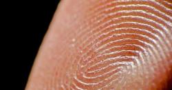 نشاناتِ انگشت کے نیچے انگلیوں کو حساس بنانے والے اعصاب دریافت