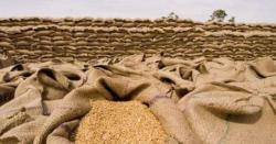 20 ہزار بوری گندم موجود، سکردومیں بلا تعطل آٹا کی  فراہمی جاری ،ڈپٹی ڈائریکٹر محکمہ خوراک