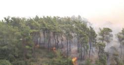 دیامر کے جنگلات میںٹمبر مافیا کے ہاتھوں تباہی کے دہانے پر پہنچ گیا