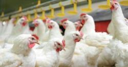مرغی کا گوشت مزید 6 روپے مہنگا،فی کلوقیمت بڑھ کرکتنی ہوگئی ،ہوش اڑ ادینے والی خبرآگئی